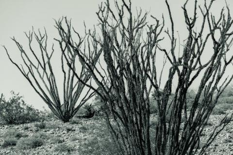 Joshua Tree National Park, 2016