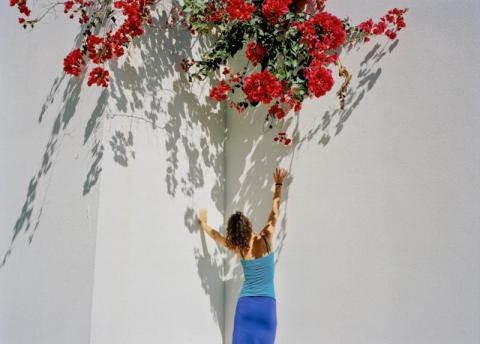 Roses, Madeira